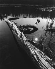 Sunburst, Siesta Lake