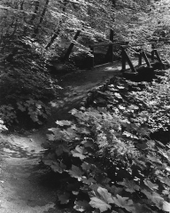 Trail, Tuolumne Grove